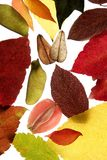 Autumn, fall leaves still white background. Autumn, fall leaves decorative still at studio white background, using the transparency stock photo