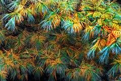 AUTUMN-FALL- les aiguilles de pin ont des couleurs également Vermont d'automne photos libres de droits