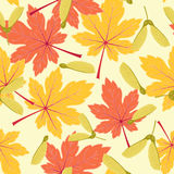 Autumn/fall maple leaves seamless pattern Royalty Free Stock Photography