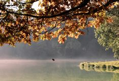 Autumn / Fall Mist and Leaves royalty free stock images