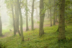 Autumn Fall nature foggy forest landscape Stock Photography
