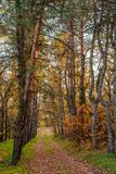Golden autumn. Fall stock image