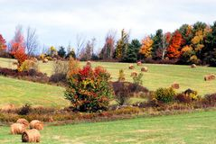 AUTUMN-FALL- NY Farm Hay Fields With Beautiful Fall Colors. Beautifully colored Fall foliage lines the hay fields of a farm in up state New York, USA stock image