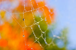 Autumn fall orange spider web background. Spider web with water droplets, shallow depth of field, taken on a beautiful sunny morning in fall (autumn) with stock photos