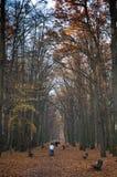 Autumn, Fall, Park. Leafs, Trees Royalty Free Stock Photos