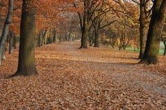 Autumn, Fall, Park. Leafs, Trees Stock Photos