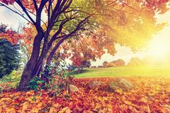 Autumn, fall park, colorful leaves Stock Photos
