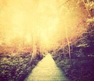 Autumn, fall park. Sun shining through red leaves. Vintage Stock Photos