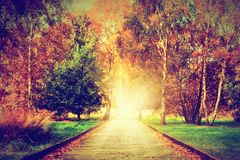 Autumn, fall park. Wooden path towards light. Autumn, fall park. Wooden path towards the sun. Colorful leaves, romantic aura and concepts of new life, hope, way royalty free stock photos