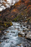 Autumn / Fall in Parque Nacional Torres del Paine, Chile Royalty Free Stock Photography