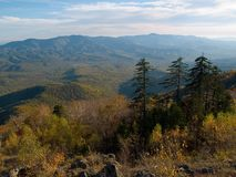 Autumn fall pine fir panorama. Autumn fall landscape with pine and fir mountain trees Royalty Free Stock Photography