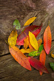 Autumn fall red golden dried leaves Royalty Free Stock Photography