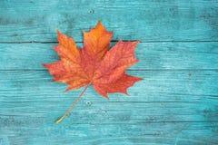 Autumn Fall Leaf on Blue Background. Autumn Fall red Leaf on Blue wooden Background stock photography