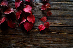 Autumn fall red leaves on wood. Background Royalty Free Stock Photography