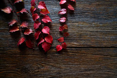 Autumn fall red leaves on wood Royalty Free Stock Image