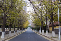 Autumn fall road in the city of china Royalty Free Stock Photos