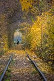 Autumn Fall Road landscape - Real trees tunnel, beautiful autumnal colors, sunny day. railway rails royalty free stock images