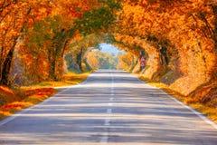 Autumn Fall Road-landschap - Echte bomen tunne stock foto's