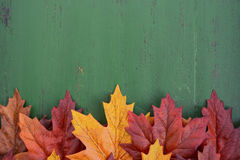Autumn Fall Rustic Wood Background Fotografie Stock Libere da Diritti