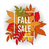 Autumn fall sale poster with color leaves. Stock Image
