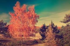 Autumn. Fall scene Stock Images