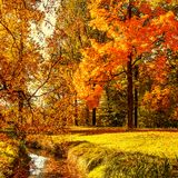 Autumn. Fall scene. Countryside landscape with red and yellow maple leaves, trees and meadow.  stock photo