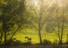 Autumn fall scene on farm with horses Stock Images
