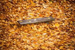 Autumn fall scenery. Bench and leaves in city park. Royalty Free Stock Photography