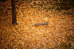 Autumn fall scenery. Bench and leaves in city park. Royalty Free Stock Photos
