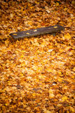 Autumn fall scenery. Bench and leaves in city park. Stock Photography