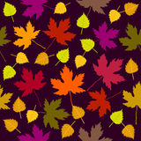 Autumn fall. Seamless vector pattern with white birch and maple leaves. 1950s-1960s motifs. Retro textile collection. On purple background Royalty Free Stock Photo