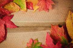 Autumn Fall Season leaves background Stock Photos