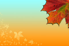 Autumn Fall Season leaves background Royalty Free Stock Images