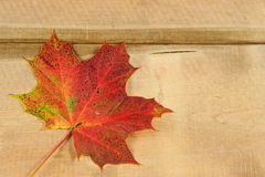 Autumn Fall Season leaves background Stock Images