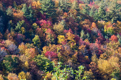 Autumn, fall, seasonal tree colors. As seen from above royalty free stock photo