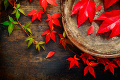 Autumn or fall still life Royalty Free Stock Photography