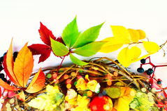 Autumn Fall - Stillife - Bright Colors Royalty Free Stock Photography