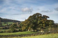 Autumn Fall stupéfiant aménagent l'image en parc de la campagne large dans le lac Image stock