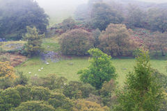 Autumn Fall-Szene, Nebelgras und Bäume, Wales, Vereinigtes Königreich Stockfotografie