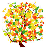 Autumn or Fall Tree. With colorful leaves Royalty Free Stock Photography
