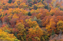 Autumn fall tree and foliage background. Golden autumn fall tree and foliage background Stock Photo