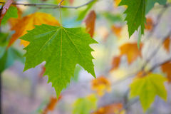 Autumn fall tree leaves background. Outdoor Stock Image
