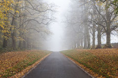 Autumn Fall Tree Lined Road Leading Into Mist or Fog Royalty Free Stock Images