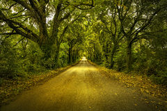Autumn or fall, tree straight road on sunset. Maremma, Tuscany, Royalty Free Stock Images