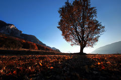Autumn fall tree in the sunset. A tree casting long shadows in beautiful fall sunset in a mountain valley Royalty Free Stock Photography