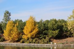 Fall look trees on Wascana Lake Regina Canada. Autumn fall trees colour yellow Canada Saskatchewan view lake bird's pelicans nature bright stock photography