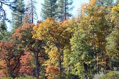 Autumn Fall Trees in Northern California stock photography