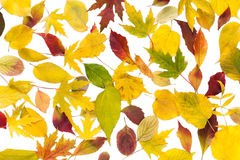 Autumn fall various colored leaves background Stock Photos
