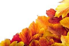 Autumn. Fall viburnum leaves Royalty Free Stock Image
