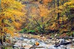 AUTUMN-FALL- vue de couleurs traversantes d'un automne de courant photo stock